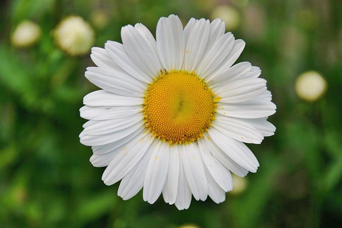 花卉在礼仪交往中的几种应用形式